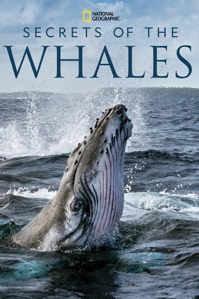215602551_secrets-of-the-whales-s01e04-1080p-hevc-x265-megusta.jpg