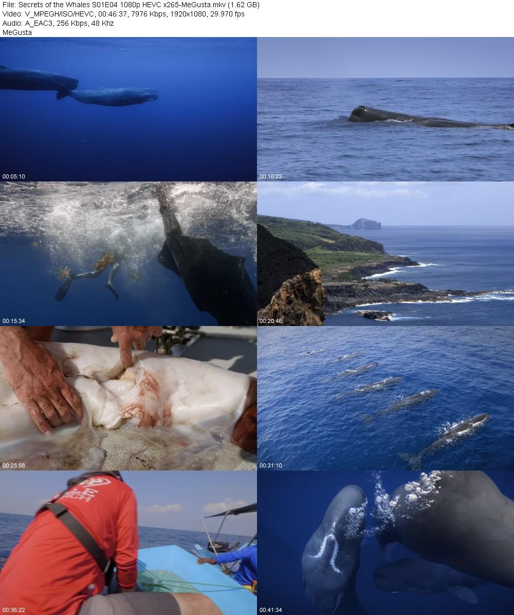 215602695_secrets-of-the-whales-s01e04-1080p-hevc-x265-megusta.jpg