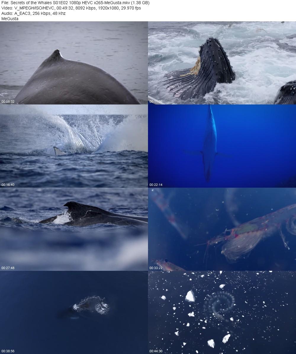 215631587_secrets-of-the-whales-s01e02-1080p-hevc-x265-megusta.jpg