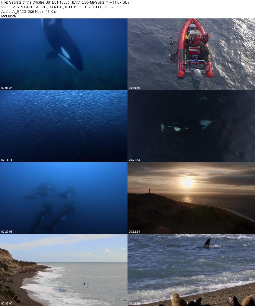 215637855_secrets-of-the-whales-s01e01-1080p-hevc-x265-megusta.jpg