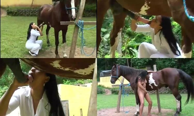 Horseporn free best Horse